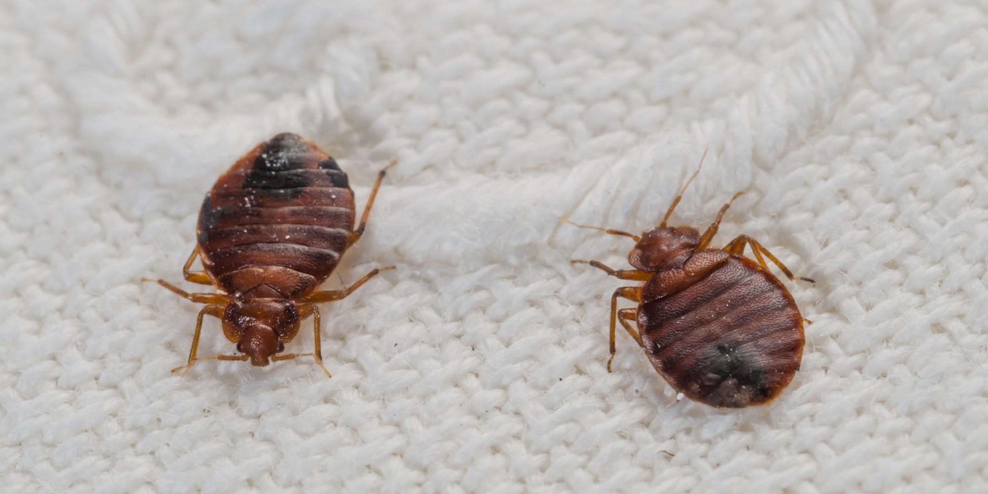 bed-bug-removal-sandwell