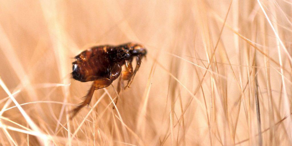 flea-removal-sandwell