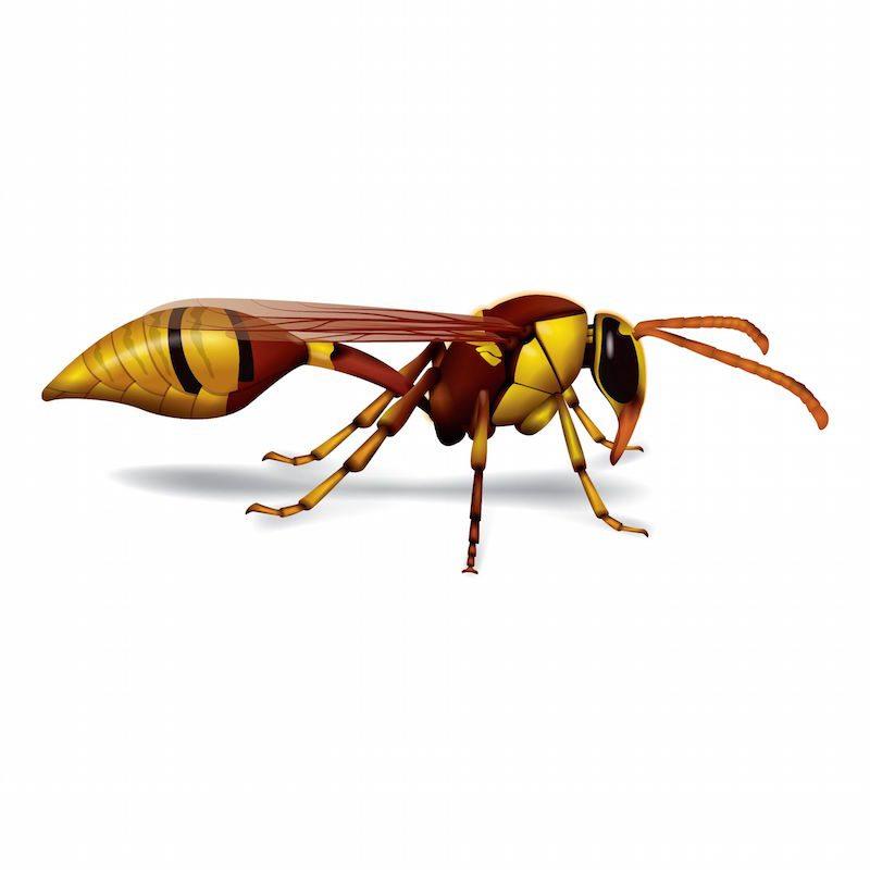 wasp-blog-2